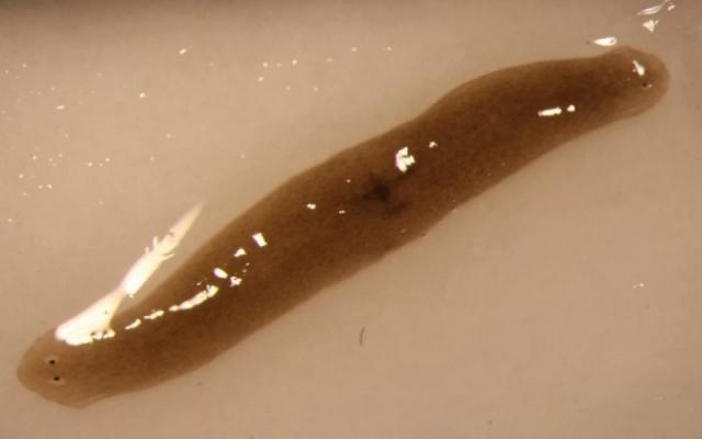 two-headed-worm.jpg?itok=-7ZbdbNt